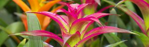 Cairns Landscaping Website