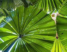 Cairns Tourism Websites